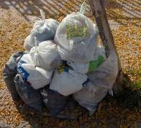 La mitad desecha el cesto de basura